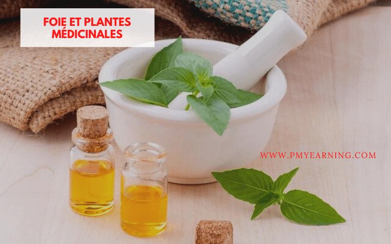 foie et plantes médicinales