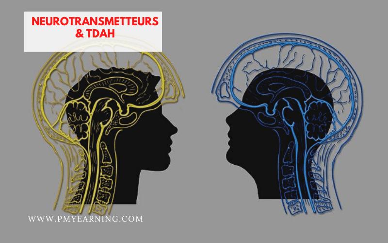 neurotransmetteurs et TDAH